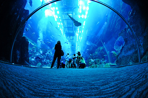 adventure, animal, aqua, aquarium, aquatic