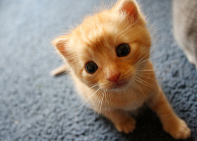 animal, aww, awww, cat, cute