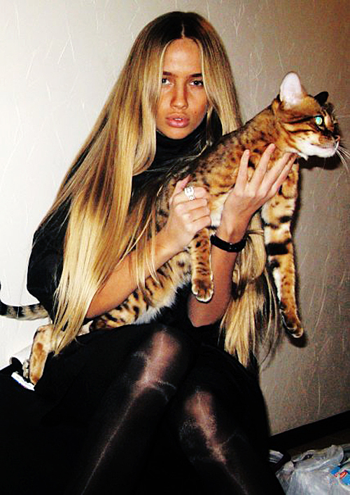 Bengal cat size and weight if you have a fat bengal cat