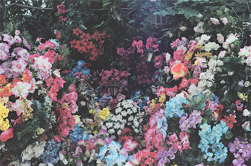 beautiful, color, colorful, colors, colour, colourful, flowers, garden, lovely, pretty