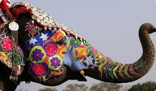 beautiful, color, cute, elephant, fashion