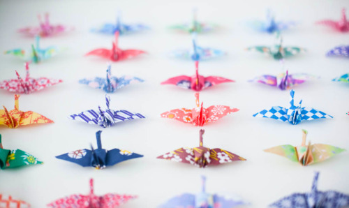 birds, colorful, cranes, paper cranes, things organized neatly