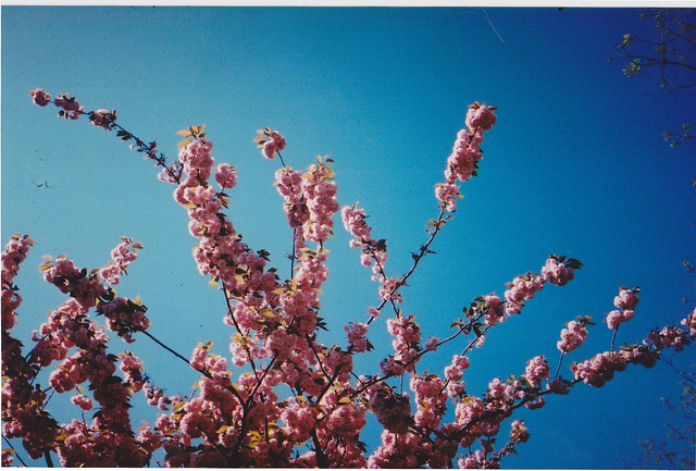 blue, flowers, pink, sky, summer