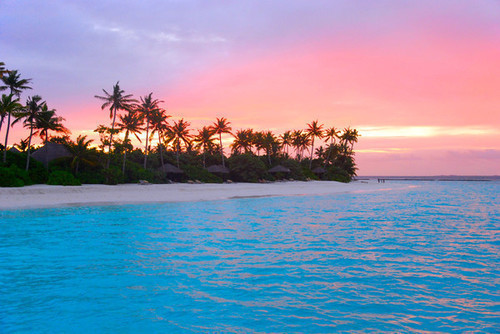 island, palm trees, sunset, water