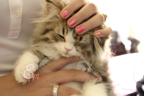 adorable, animal, cat, cute, food, friends, jewelry, kiss, kitten, kitty, love, makeup, nature, photography, rings, scenery, vintage
