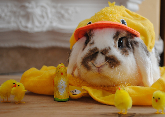 adorable, bunny, cute, duck, happy easter