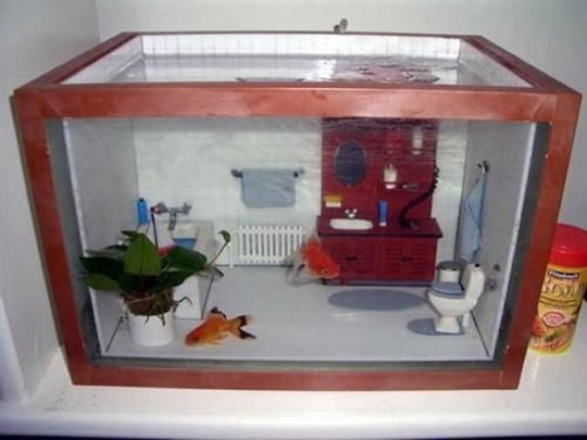 aquario, bathroom, casa, cute, fish, peixe