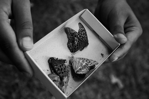 b&w, black and white, box, butterflies, butterfly