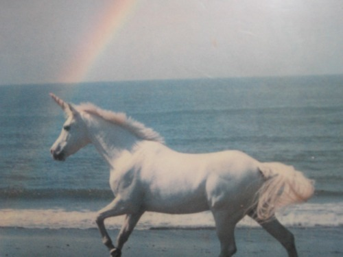 beach, fantasy, photography, the best shit ever, unicorn