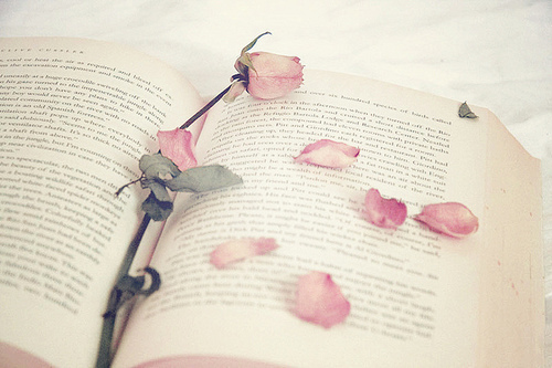 beautiful, blossoms, book, books, flower