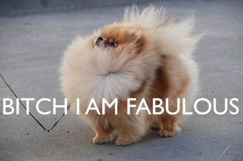 bitch, bitch i am fabulous, dog, fabulous, love