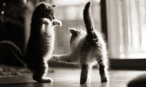 black and white, cute, kittens