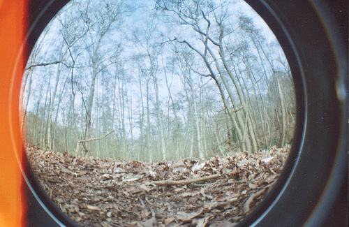 camera, eye, fish, fisheye, forest, photography, trees, vintage