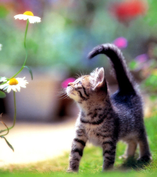 cat, cute, flower, kitten, miauw, separate with comma, summer