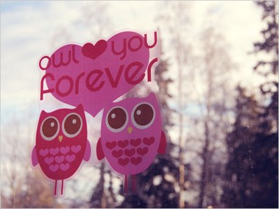 cool, cute, heart, love, owl, pink, text