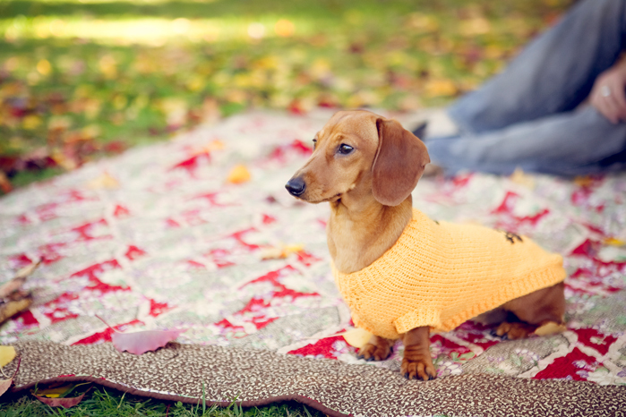 cute, dachshund, daschund, indie wedding