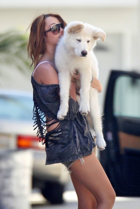 cute, dog, fashion, girl, grunge, hair, hannah montana, hipster, holiday, husky, indie, legs, miley, miley cyrus, not grunge, not husky, pet, poser, pretty, puppy, shorts, tan