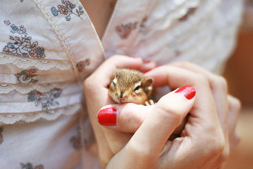 animal, beauty, chipmunk, clothes, cute, fashion, girl, heart, love, pet, photography
