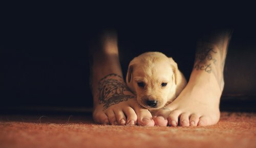 awn, cute, dog, feet, foot