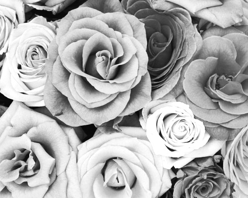 black and white, floral, flower, flowers, grey