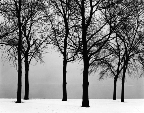 black and white, photography, snow, trees, winter - image ...