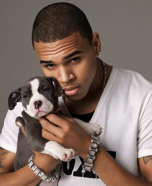 breezy, chris brown, cute, puppy