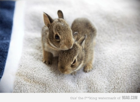 bunny, cute, easter, fluffy, rabbit