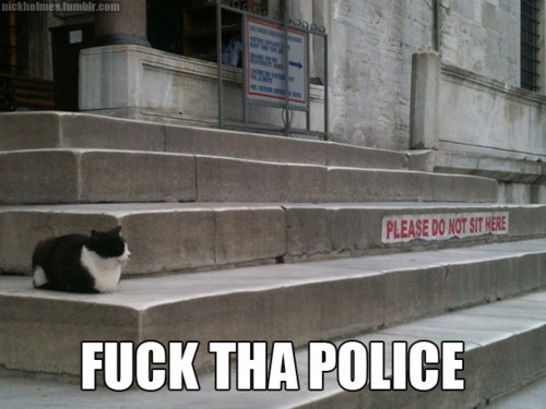 cat, cat police stairs, cute, fuck da poliec, fuck the police, fuck yea, funny, lmfao, lol, meme, not a fuck was given