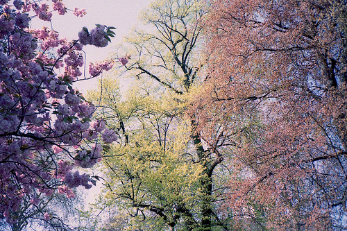 color, colorful, colour, colourful, flowers, garden, lovely, pink, pretty, purple, sky, trees
