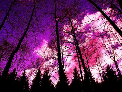 color, fire, forest, pink, tree