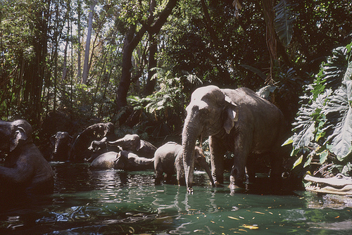 elephant, hipster, indie, water