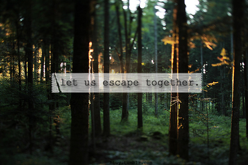 escape, forest, love, separate with comma, sunlight