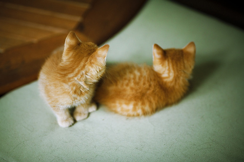 adorable, animals, beautiful, cats, cute, film, inspiration, kittens, soft