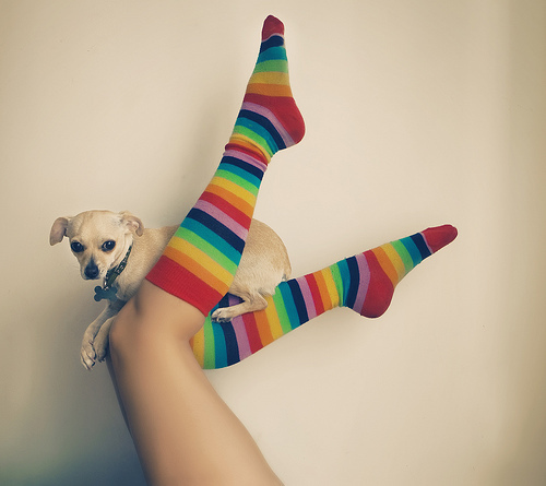 amazing!!(:, cute, puppy, rainbow, separate with comma, socks