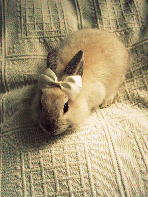 < 3, amazing, animal, beauty, bow, cute, love, pet, photography, rabbit, retro, room, vintage