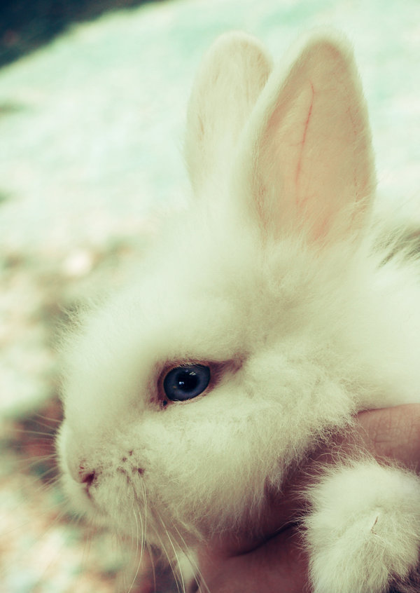 animal, bunny, cute, easter, kawaii, rabbit, withe