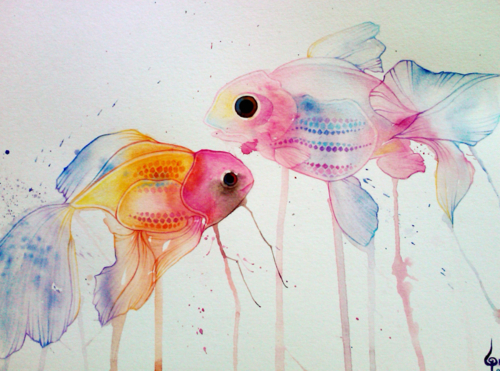 animal, colors, fish, fishes, love