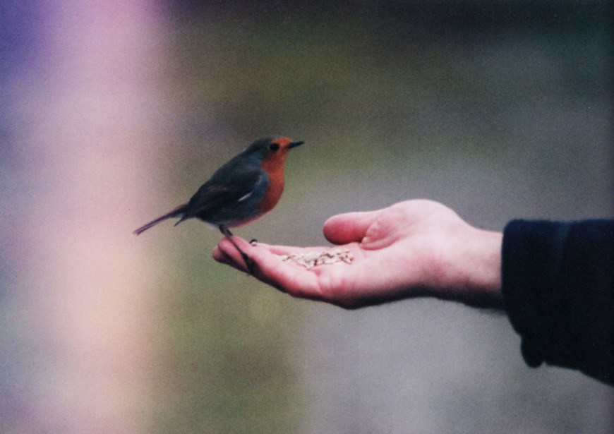 beautiful, bird, film grain, grain, hand