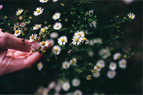 beautiful, coffe, cute and flower