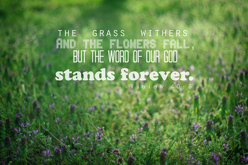 bible, bible verse, christian, god, grass