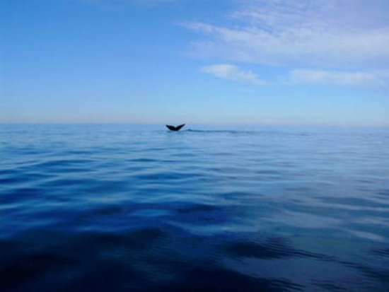 blue, ocean, photography, whale