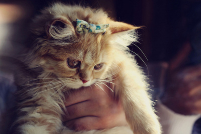 bow, cat, cute, kitten, linda