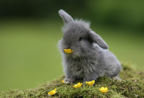 bunny, cute, flowers and grass