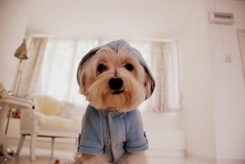 cute, love, photography, pretty, puppy
