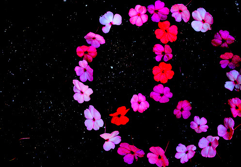 epic fail, fail, flower, peace