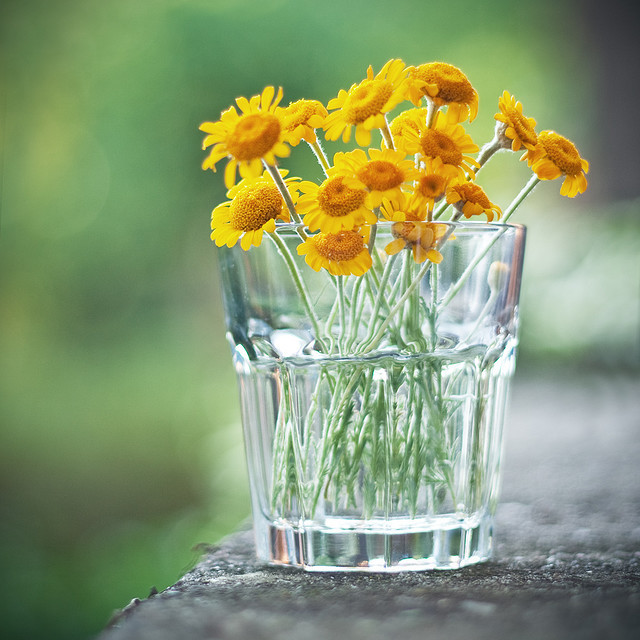 flowers, glass, photography, spring, sun