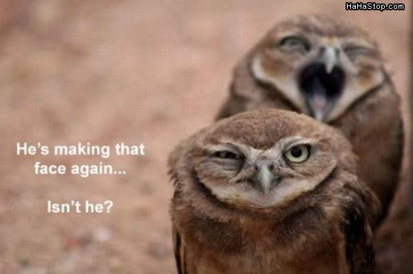 funny, hahahhahah, owl