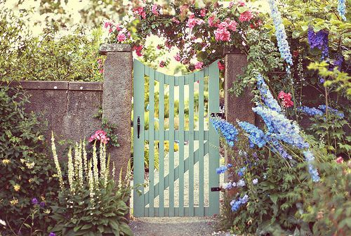 garden, gate, pretty and roses