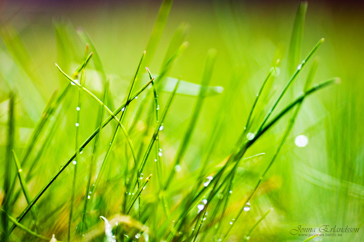 grass, rain and spring
