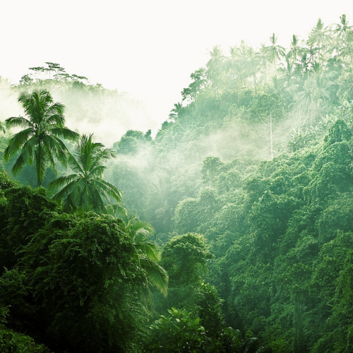 dream, exotic, fog, green, greenx, hawaii, island, mist, nature, palm trees, paradise, rainforest, tropical, valley